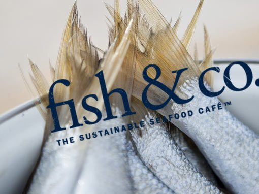 Fish And Co – 2017